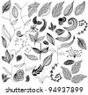 set of leaf vector - stock vector