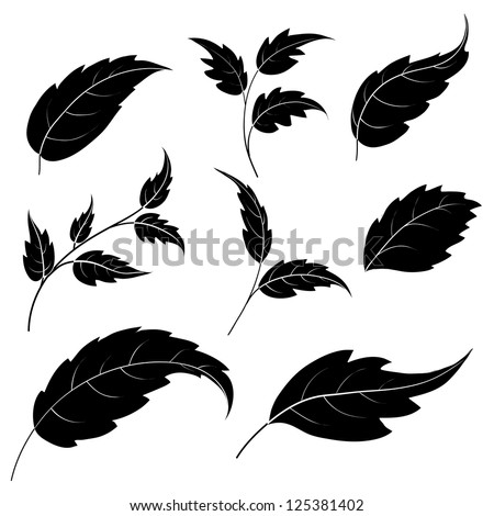 Set of leaves of plants and trees, black silhouettes on white background. Vector - stock vector
