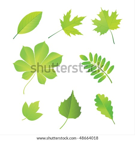 Set of leaves of various trees. Vector.