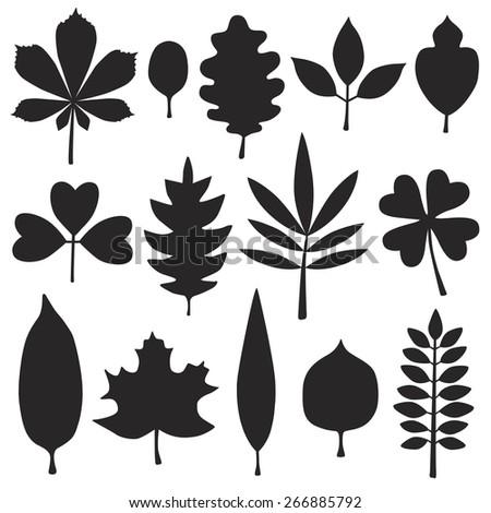 Set of  leaves silhouette. Vector illustration. - stock vector