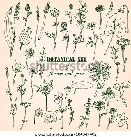 Set of line drawing herbs, vector illustration - stock vector