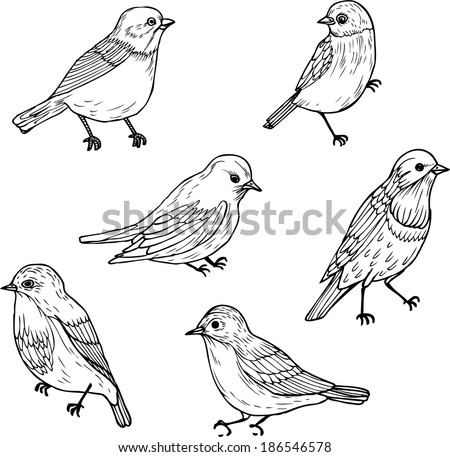 Set of line drawings of birds ink drawing hand drawn vector illustration