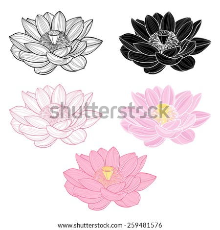 Set of lotus isolated on white background. Hand drawn vector illustration, sketch. Elements for design. - stock vector