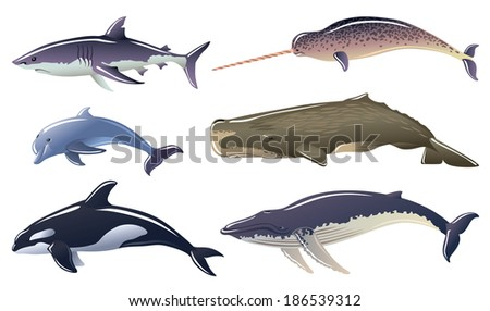 Set of Marine mammals - stock vector