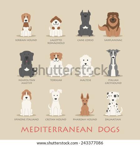 Set of mediterranean dogs , eps10 vector format - stock vector
