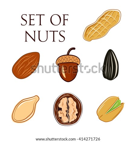 Set of Nuts. Acorn, almond, walnut, sunflower seed, pistachio, pumpkin seed, peanut. Food vector illustration.