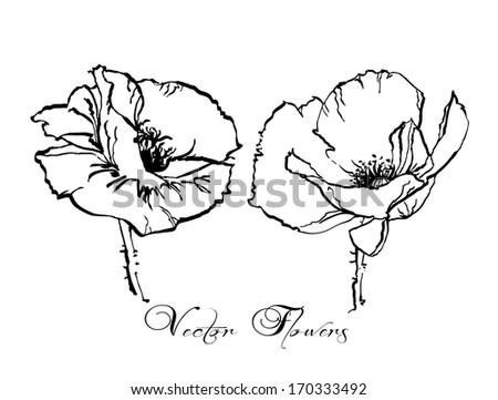 Set of 2 painted vector poppy flowers - stock vector