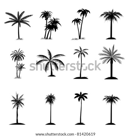 Set of palm tree, isolated on white, vector - stock vector
