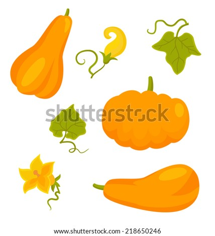 Set of pumpkins and flowers isolated on white, vector illustration