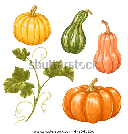 Set of pumpkins. Collection decorative vegetables and leaves.
