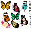 Set of realistic colorful vector butterflies for design - stock vector