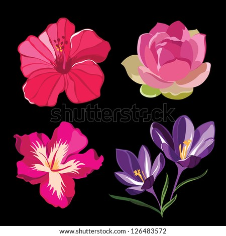 Set of realistic flowers, isolated on black background.Vector illustration. - stock vector