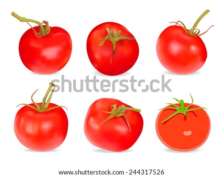 Set of Realistic red Tomatoes. Vector illustration. Isolated on white background - stock vector