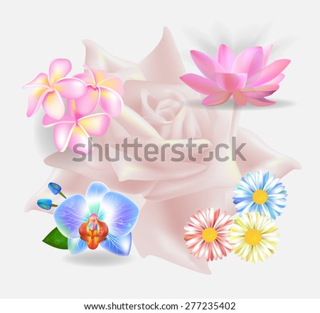 Set of realistic vector flowers - stock vector