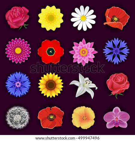 Set of red rose, orchid, lotus, cornflower, tulip, poppy, white lily, chamomile, chrysanthemum, sunflower, dahlia, dandelion. Spring and summer flowers isolated. Floral design elements, vector icons.