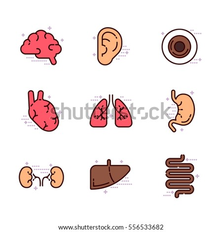Set of schematic anatomical organs vector illustration on white background. Anatomy and medicine topic.