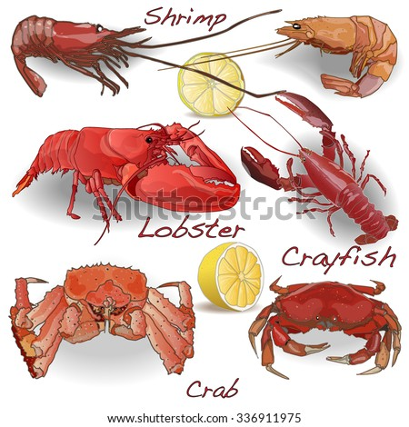 Set Sea Food Shrimps Crab Lobster Stock Vector 336911975 ...