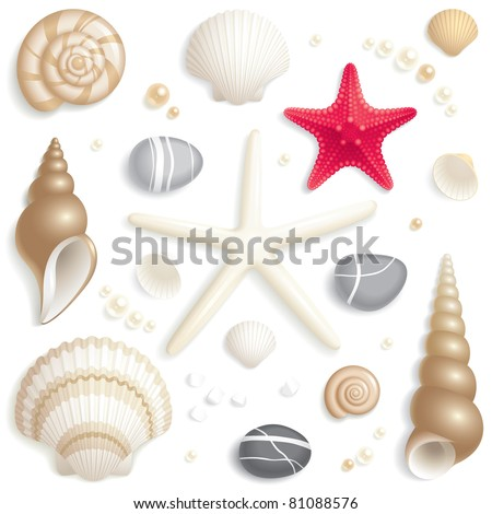 Set of seashells, starfishes and pebbles - stock vector