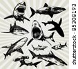 Set of Sharks Hand Drawn - stock vector