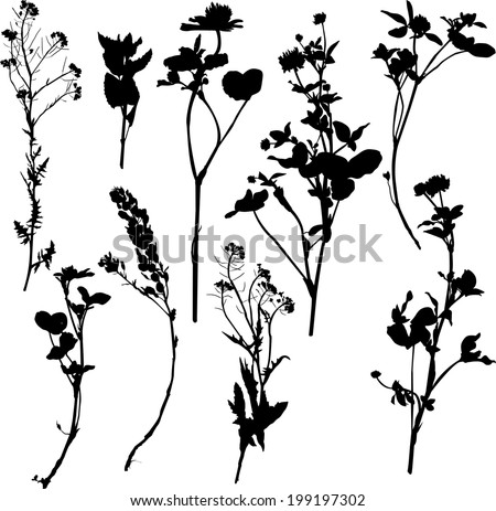 Set of silhouette by herbs and flowers, hand drawn vector illustration - stock vector