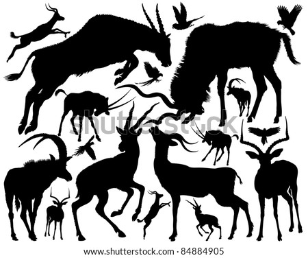 Set of silhouettes of a antelopes of a different appearance and the size on a white background. - stock vector