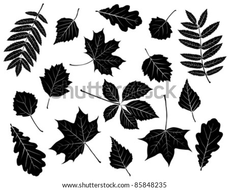Set of silhouettes of leaves. Maple, oak, mountain ash, birch, aspen, wild grapes, poplar and hawthorn. Isolated on white. - stock vector