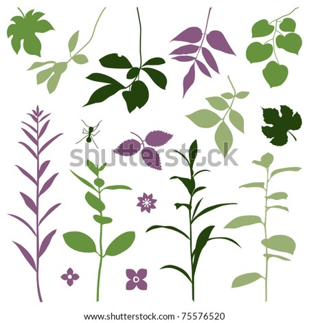 Set of silhouettes of summer plants. Vector illustration.