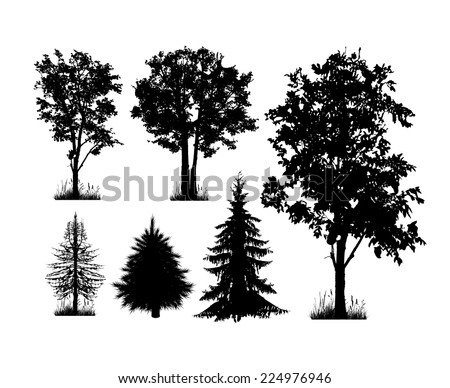 Set of silhouettes of trees on a white background. Vector - stock vector