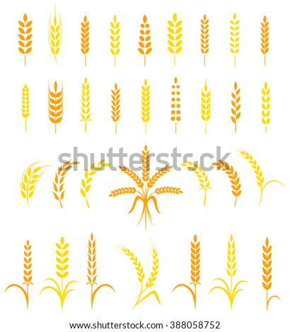 Set of simple and stylish Wheat Ears icons and design elements for beer, organic local farm fresh food, bakery themed design. - stock vector