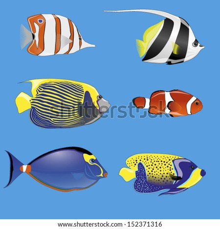 set of six tropical fish with different colors - stock vector
