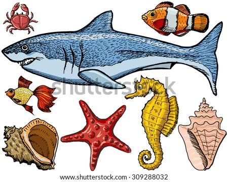 Set of sketch, hand drawn, vector illustration of sea life - stock vector