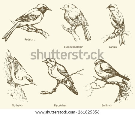 Set of small forest birds: Bullfinch, Innkeeper, Nutpecker, Mugimaki, Excubitor, European Robin. Monochrome freehand ink drawn background sketch in art scribble style pen on paper with space for text - stock vector