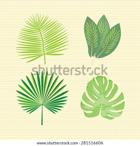 Set of 4 species of palm leaves. Tropical exotic plants. Vector. - stock vector