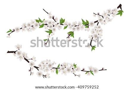 Set of spring blooming tree branches, tree branch with white flowers and leaves. - stock vector