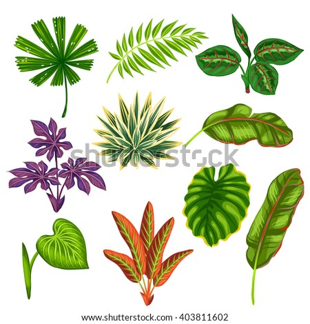 Set of stylized tropical plants and leaves. Objects for decoration, design on advertising booklets, banners, flayers.