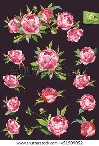 Set of traditional flowers and decorative elements, big vector collection. Pink Peonies flower bouquet. No transparency and shadows