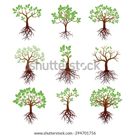 Set of Trees, Green Leafs and Roots - stock vector