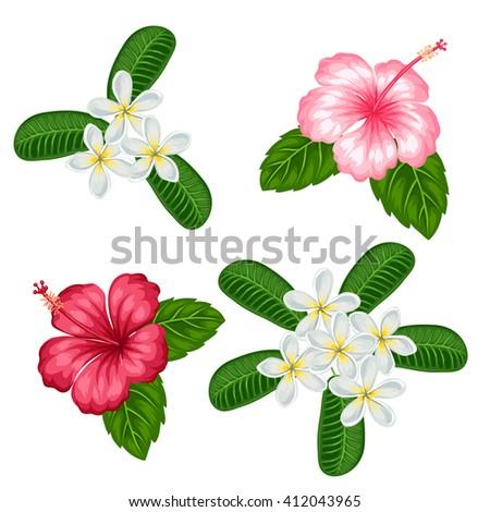 Set Tropical Flowers Hibiscus Plumeria Objects Stock-Vektorgrafik ...