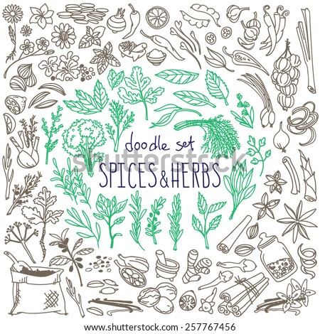 Set of various doodles, hand drawn rough simple sketches of various types of spices and herbs. Vector freehand illustration isolated on white background. - stock vector
