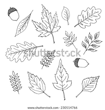 Set of various types of hand - drawn leaves - stock vector