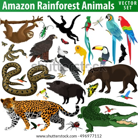 Set Vector Amazon Rainforest Jungle Animals Stock Vector