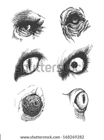 Set of vector animal eyes. Hand drawn. Eps8 - stock vector