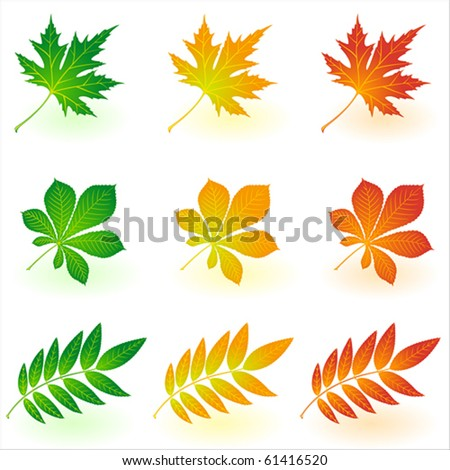 Set of vector autumn leaves - stock vector