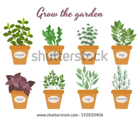 Set of vector culinary herbs in pots with labels with fresh oregano  rocket  thyme  bay  basil  rosemary  parsley and sage with text above - Grow The Garden - stock vector