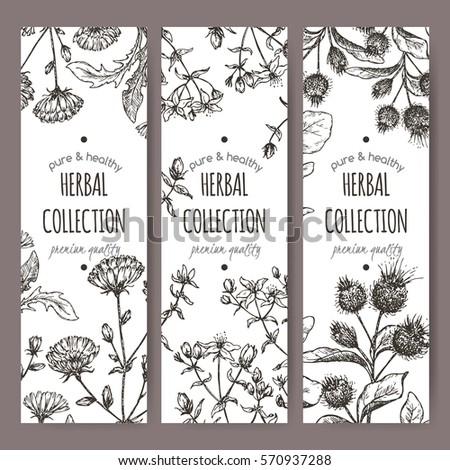 Set 3 Vector Herbal Tea Labels Stock Vector 570937288 - Shutterstock