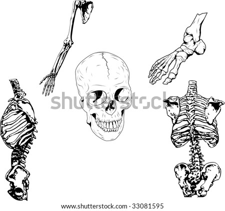 Set of vector illustration. 5 different parts of a skeleton. File in eps 8 for easy modification. - stock vector