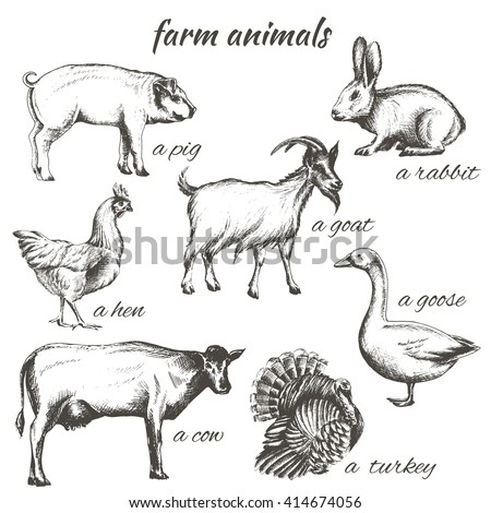 set of vector sketch illustrations of farm animals isolated on white background, cow, goat, chicken, turkey, goose, rabbit - stock vector