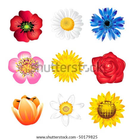 Set of vector  spring flowers isolated on white - stock vector