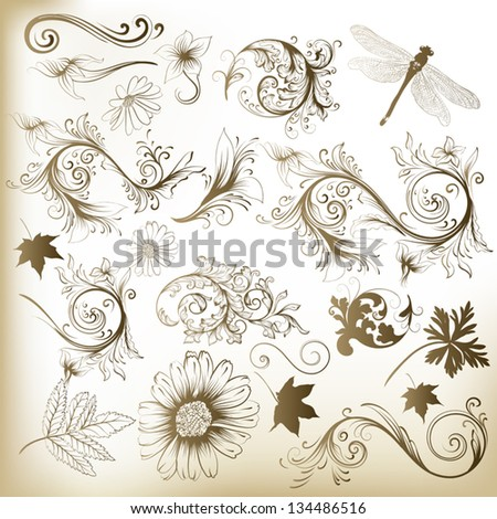 Set of vector swirl ornaments and leafs for design - stock vector
