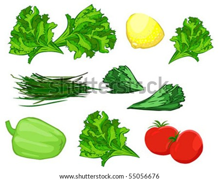 set of vegetables and condiments on white background - stock vector